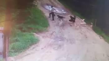 50岁保安惨遭12只狗扑咬致死,原因让人震惊!