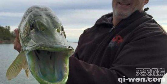 男子钓鱼竟钓到了一条让人惊奇的绿巨人!