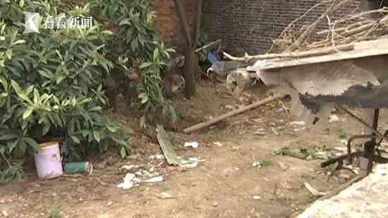 男子杀妻埋尸长达五年柿子树下挖出衣服骨头