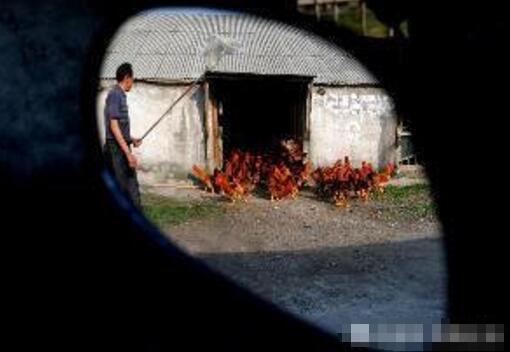 老农盖房子养起了这种恶心东西,竟赚的盆满钵满因村民羡慕!