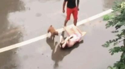 男子雨中暴打怀孕妻子狗狗竟在一旁做如此动作...