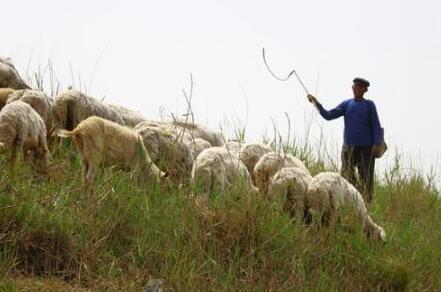 牧羊人被离奇杀害,起因竟是给村民老婆取的这个外号...