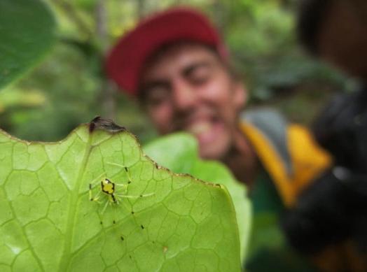 游客摘下树叶发现一张笑脸,仔细一看被吓的满头大汗!
