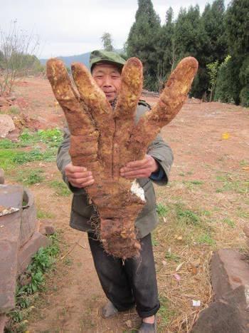 """农村老大爷田里挖出巨型""""手掌"""",仔细一看两脚发软了!"""