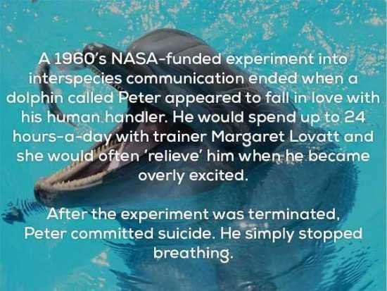 25个会让你感觉凉飕飕的冷知识:海豚居然爱上了他的训练师》