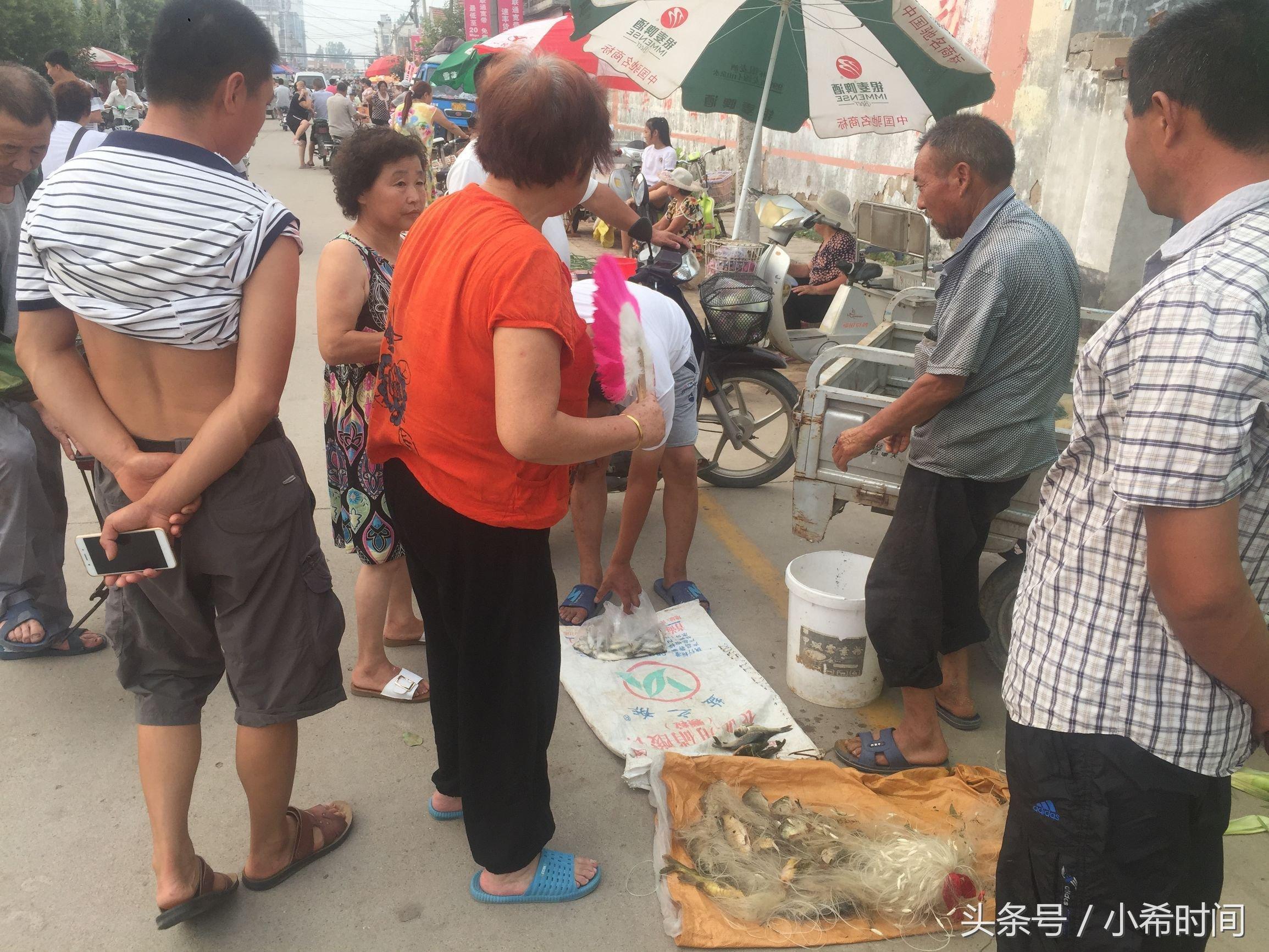 """35高温下六旬大爷摊位上的""""精品货""""现捕现卖4元一斤,供不应求"""