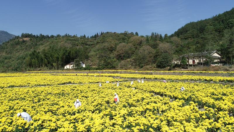 618京东智能城市云上集市进行时,京东智能城市助力农民增收致富