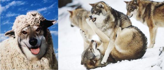 嗅觉敏锐听觉迟钝的动物