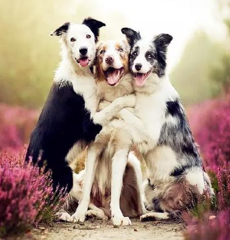 这些动物全家福,美翻了!