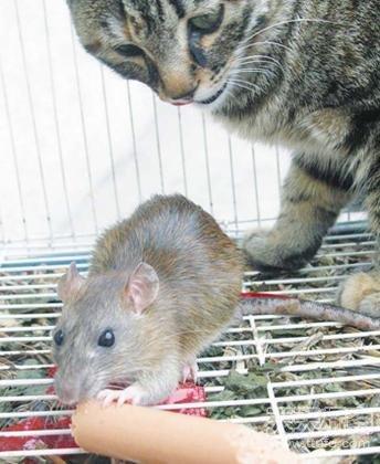 动物世界里最让人费解的十大神秘现象