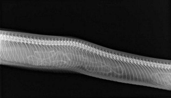 动物身体与骨骼的组合画法