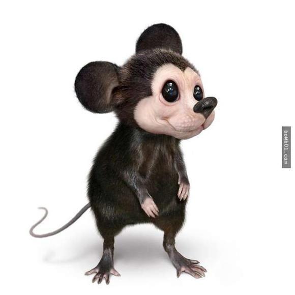 ▼米奇真的是一只可爱的小老鼠.