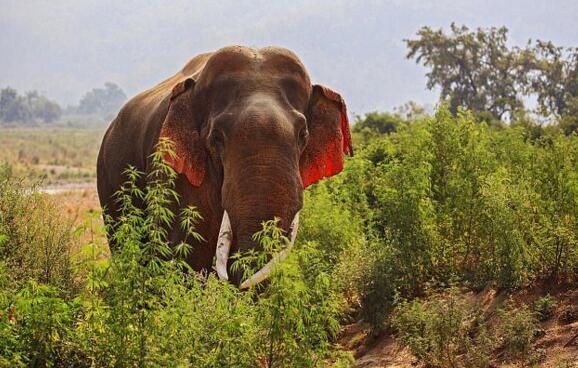 大象耳朵填词